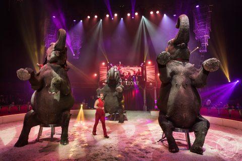 cirque-bouglione-surprise-nantes-leboeuf-22