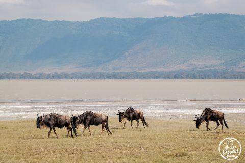 Tanzanie-Nicolas-Leboeuf-Photographe-01