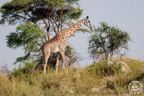 Tanzanie-Nicolas-Leboeuf-Photographe-04