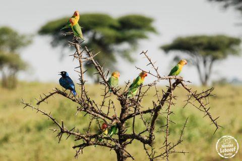 Tanzanie-Nicolas-Leboeuf-Photographe-05