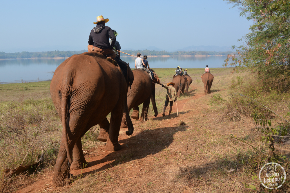 Ganesha Park Thailande éléphant