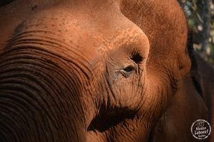 Ganesha Park Elephants